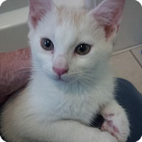 Adopt A Pet :: Connor - Houston, TX