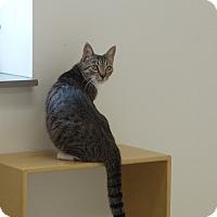 Adopt A Pet :: Gabrielle - Chambersburg, PA