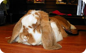 Lop, French for adoption in North Gower, Ontario - Winston