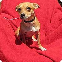 Adopt A Pet :: Fabio - Oakland, AR