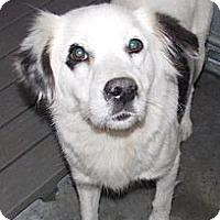 Adopt A Pet :: Frosty - Shirley, NY