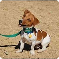 Adopt A Pet :: Buster - West Chester, OH