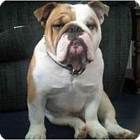 Adopt A Pet :: Meaty - Winder, GA