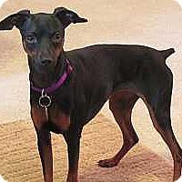 Adopt A Pet :: Lina - McDonough, GA