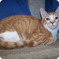 Adopt A Pet :: K-Hannah4-Howie - Colorado Springs, CO