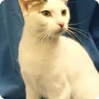 Adopt A Pet :: K-Fielding5-BamBam - Colorado Springs, CO