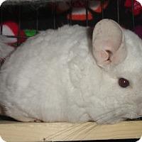 Adopt A Pet :: Bart - Titusville, FL