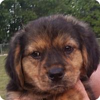 Adopt A Pet :: Beauty - Huntingburg, IN
