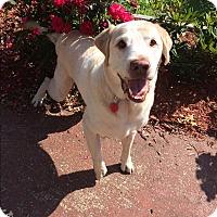 Adopt A Pet :: Beau - Russellville, KY