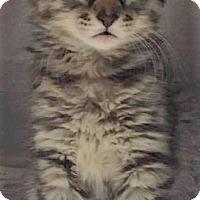 Adopt A Pet :: Carter - Chattanooga, TN