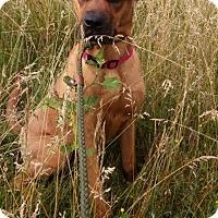 Adopt A Pet :: Summer - ADOPTED! - Zanesville, OH