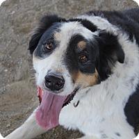 Adopt A Pet :: Clyde - Winters, CA