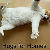 Domestic Shorthair Cat for adoption in New York, New York - FOSTER / ADOPT Purry LOVE BUGS