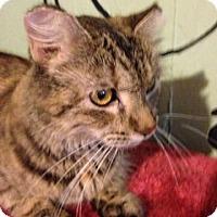 Adopt A Pet :: Angel - Bridgeton, MO
