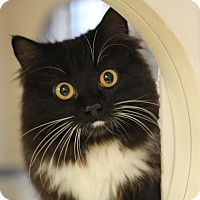 Adopt A Pet :: Evelyn - Richmond, VA