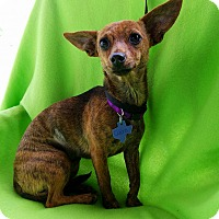 Adopt A Pet :: Cairo - San Antonio, TX