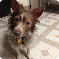 Adopt A Pet :: Penn - Sheboygan, WI