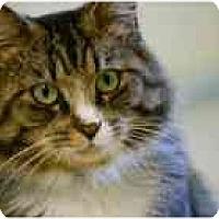 Adopt A Pet :: Colin - Marietta, GA