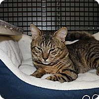 Adopt A Pet :: Mitch (LE) - Little Falls, NJ
