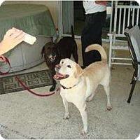 Adopt A Pet :: Ted - Altmonte Springs, FL