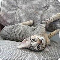 Adopt A Pet :: Tick - Modesto, CA