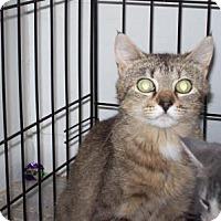 Adopt A Pet :: Patience - Kelso/Longview, WA
