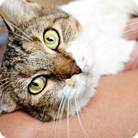 Adopt A Pet :: Kiki - Xenia, OH