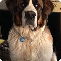 Adopt A Pet :: Mojo - Broomfield, CO