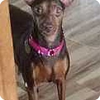 Adopt A Pet :: Jersey Girl - Columbus, OH