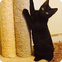 Adopt A Pet :: Jinx - Chesterfield Township, MI