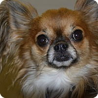 Adopt A Pet :: Harly - Meridian, ID