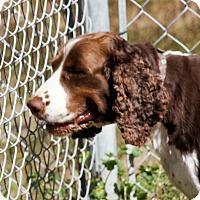 Adopt A Pet :: Rosie - Sylvania, GA