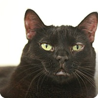Adopt A Pet :: Geneva - Canoga Park, CA