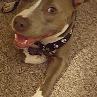 Adopt A Pet :: Courtesy Listing: Belz - San Diego, CA