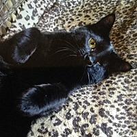 Adopt A Pet :: Rosie - Burnham, PA
