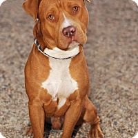 Adopt A Pet :: Roscoe - Newhall, CA