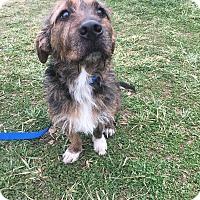 Adopt A Pet :: Copper - Waldorf, MD