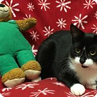 Adopt A Pet :: Lex - Americus, GA