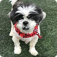 Adopt A Pet :: Bella - Burlingame, CA