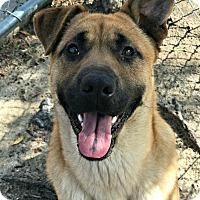 Adopt A Pet :: Toba - Peace Dale, RI