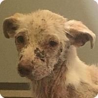 Adopt A Pet :: Mr Ernie - Rogue River, OR