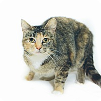 Adopt A Pet :: Addison - New Castle, PA