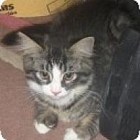 Adopt A Pet :: K-Leonard4-Joey - Colorado Springs, CO
