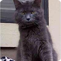 Adopt A Pet :: Ralph - Cincinnati, OH