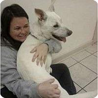 Adopt A Pet :: Alfie - Staunton, VA