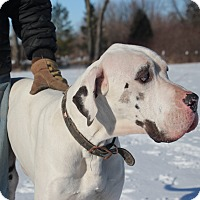 Adopt A Pet :: Riggs - Woodstock, IL
