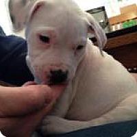 Adopt A Pet :: Oreo - Marlton, NJ