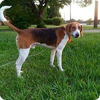 Foxhound Dog for adoption in Warner Robins, Georgia - Mario