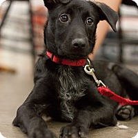 Adopt A Pet :: Sara - Minneapolis, MN