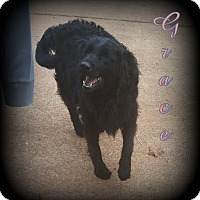 Adopt A Pet :: Grace - Denver, NC